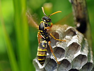の 種類 蜂